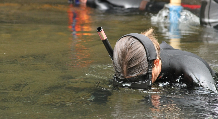 Snorkelers search for Hellbenders